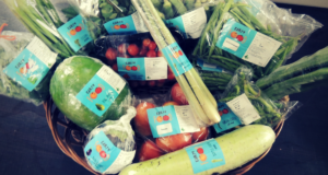 Fresh Vegetables from Earth Food